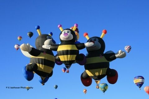 The bees are a fan favorite at the balloon fiesta.  This image is of all 3 bee balloons -- Joey, Lilly and Joelly.