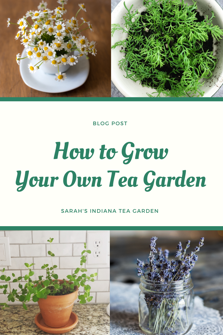 The Complete Guide To Starting Your Own Tea Garden Container