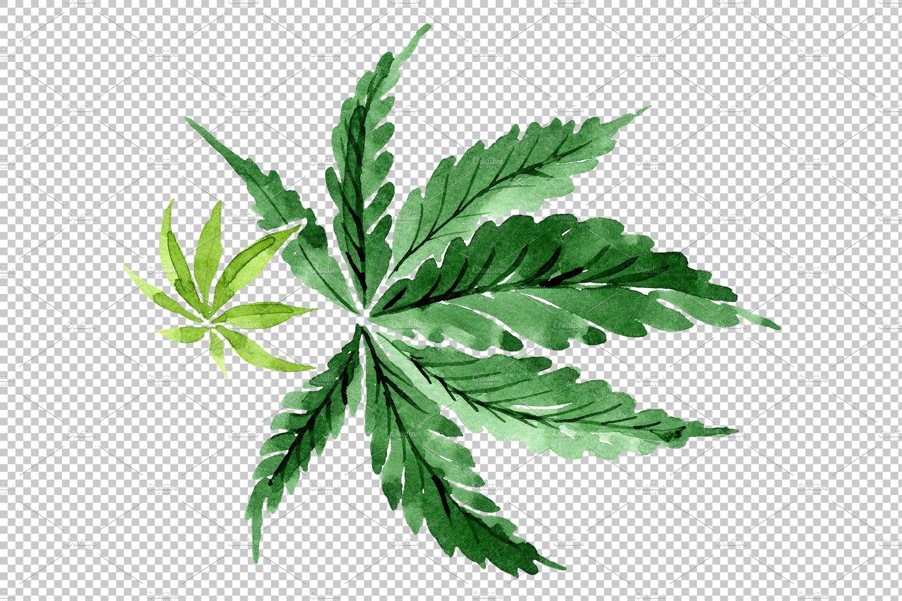 Leaves Hemp Plant Watercolor Png Watercolor Plants Plant Illustration Plants