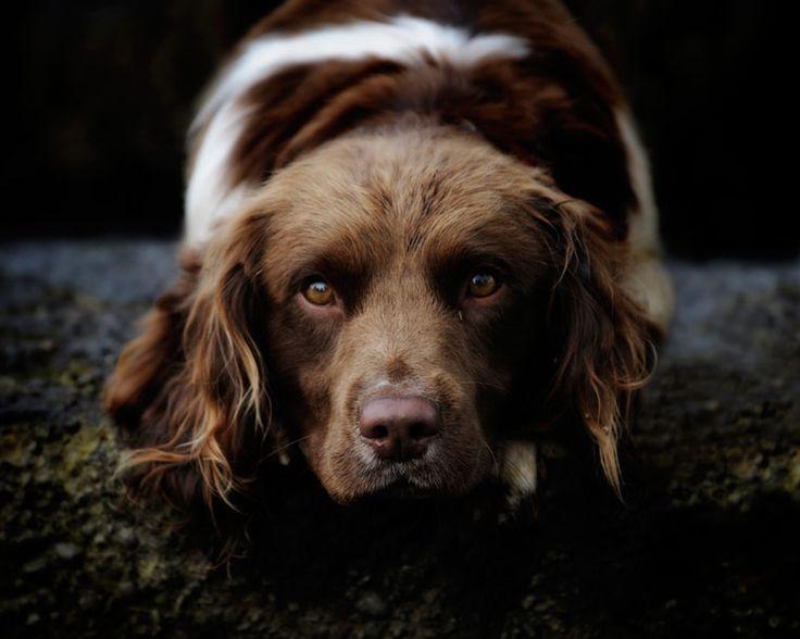 Thegiftsoflife Pet Photospet Photographyer
