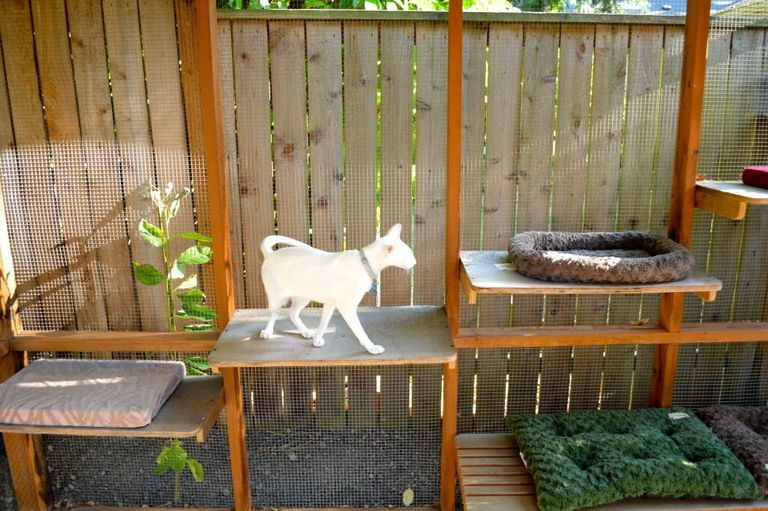 Join Portland's 2017 Catio Tour (photos) in 2020 Cat