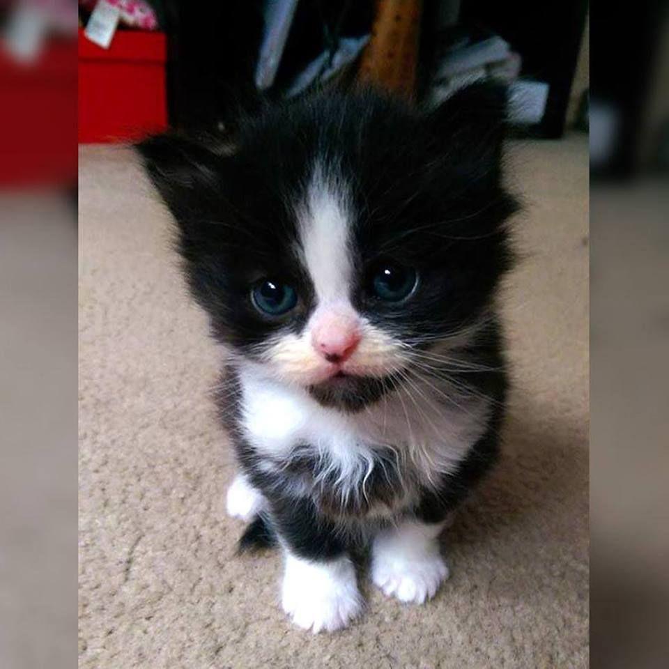 Fuzzy Kitty Kittens Cutest Cute Little Animals Beautiful Kittens
