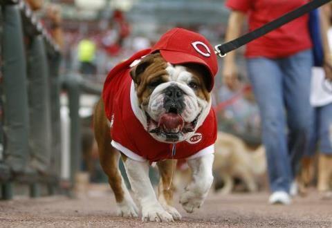 Da Reds Cincinnati News Cincinnati Tiny Puppies
