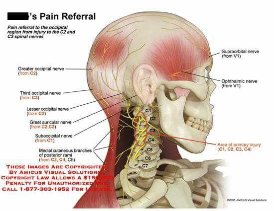 Good Illistration. | Nervio occipital | Pinterest | Nervios