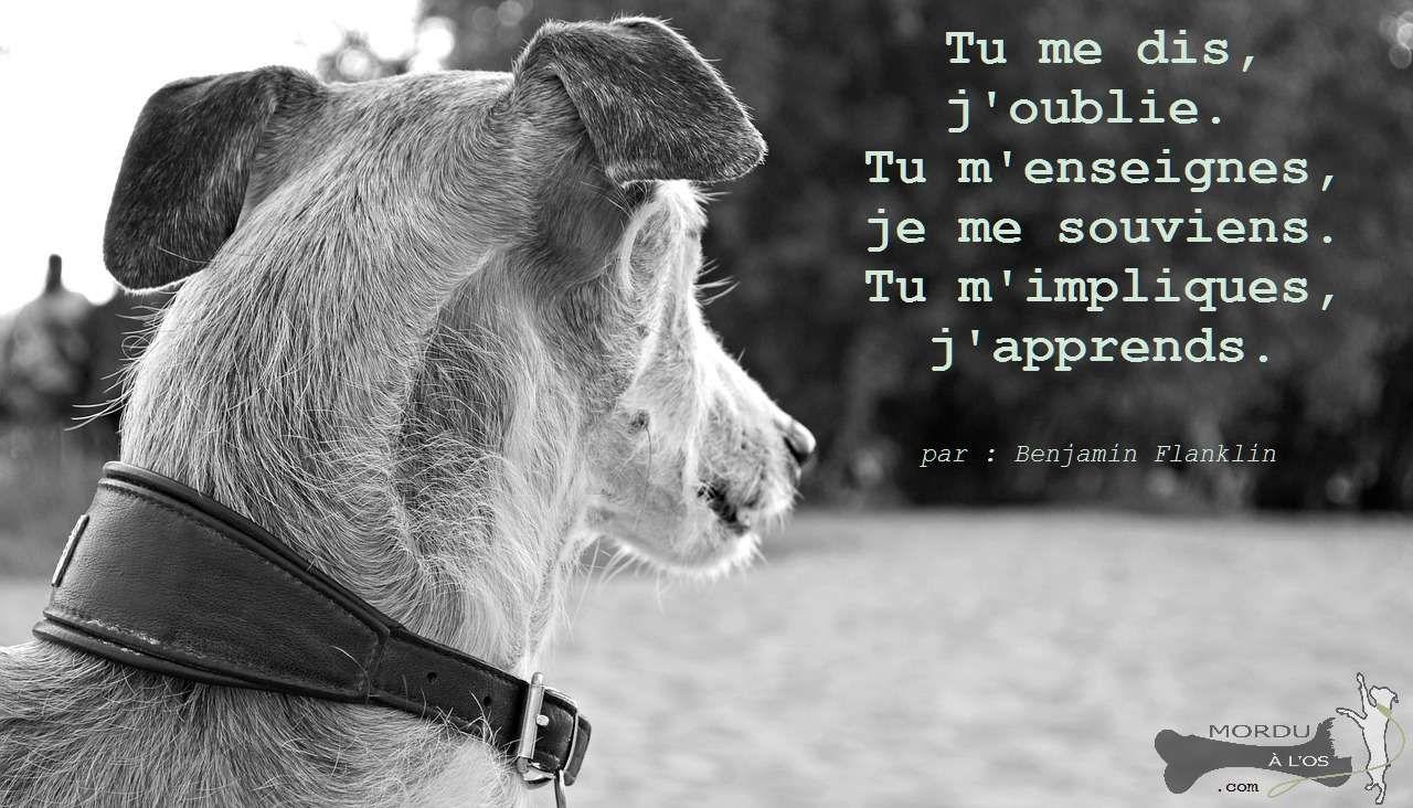 Bien comprendre comment un chien apprend et communique c'est la base d'une relation solide.