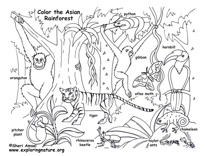 Habitats Biomes Coloring Nature Animal coloring books