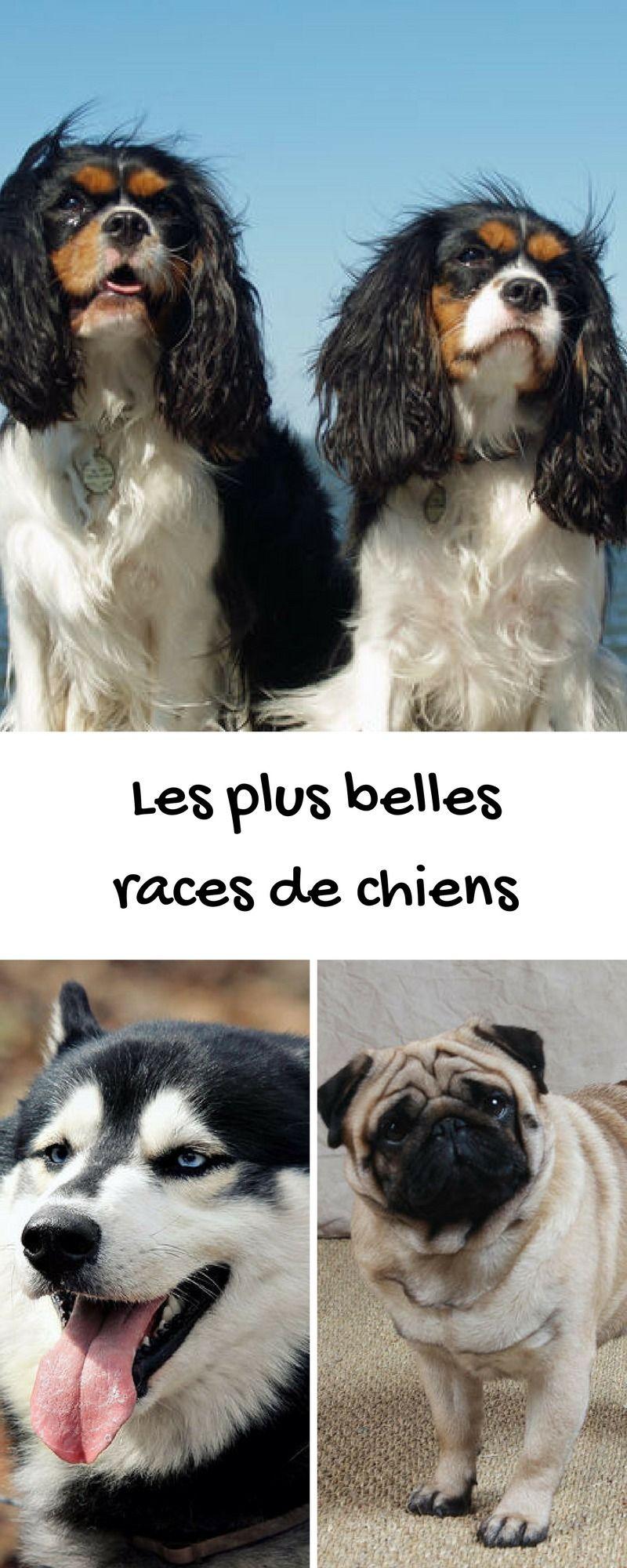 Chien Les Races Les Plus Belles Du Monde Pinterest Races De