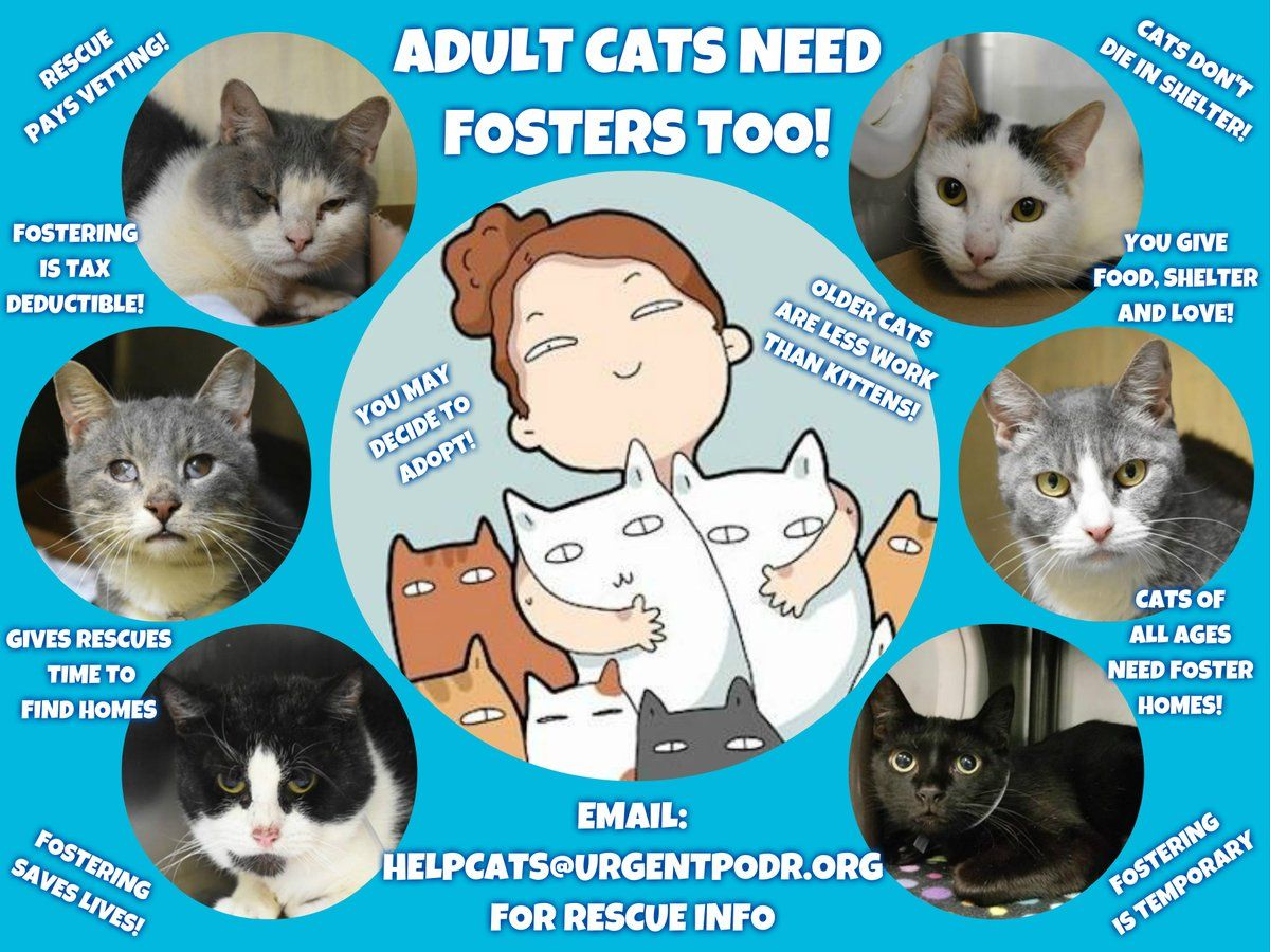 Pin by AmCurious NJ on Animal Protection Cats, Cat ages