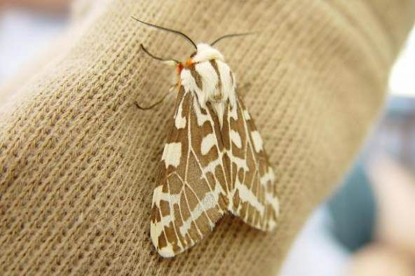 How to get rid of moths? Home remedies for moths. Natural remedies to get rid of moths fast. Top methods to kill moths at home. Treatment to kill moths.