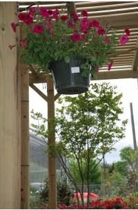 It's time to plant some beautiful fruit trees! Come check out our huge selection. #FruitTree