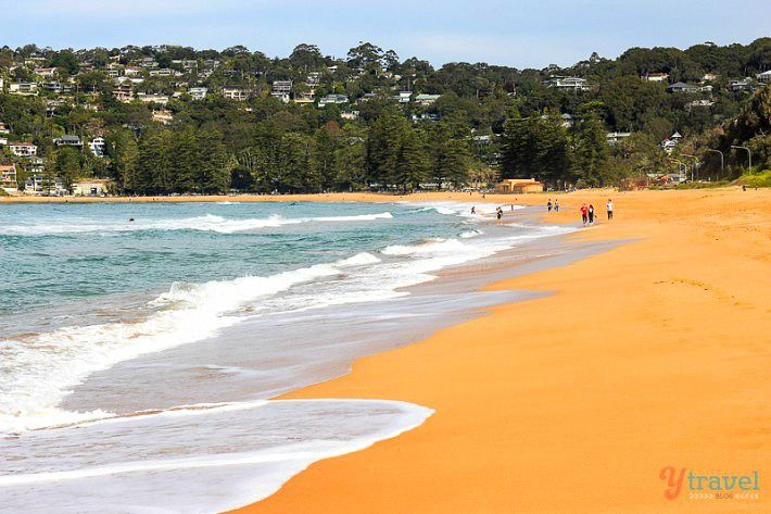 Palm Beach Sydney One Of The Best Beaches In Sydney