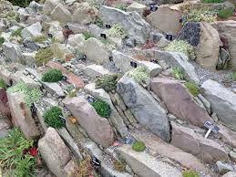 Resultado de imagen de crevice garden