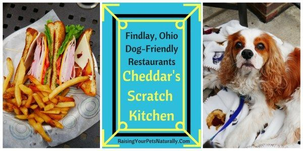 Pin on Raising Your Pets Naturally with Tonya Wilhelm