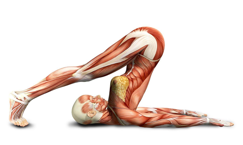 yoga-anatomy.jpg (1440×861)   Sport   Pinterest