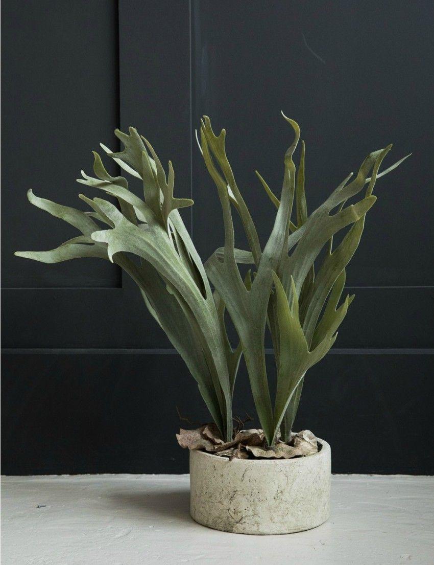 Abigail Ahern Flowers, Plants U0026 Vases
