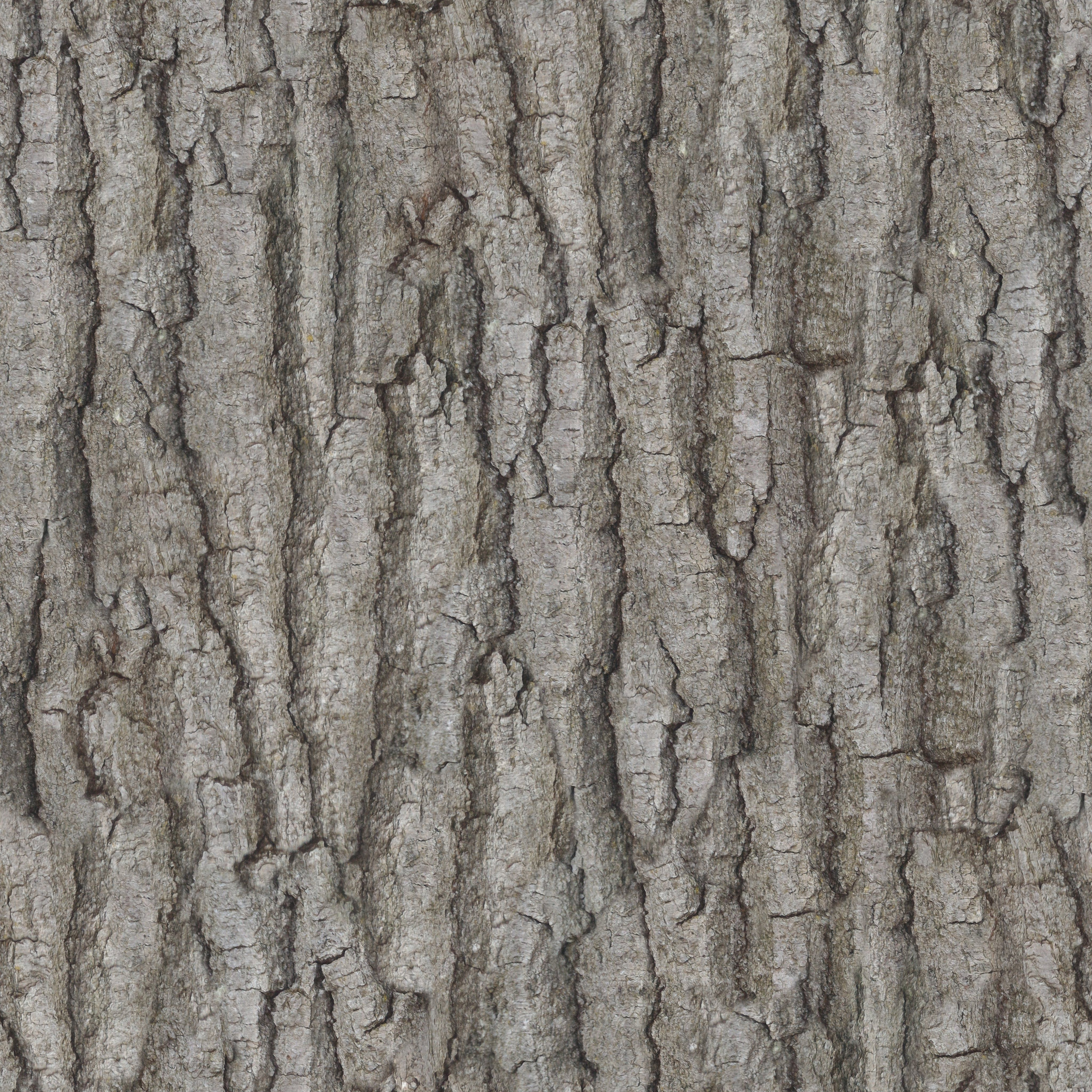 Zero Cc Tileable Bark Texture Photographed And Made By Me