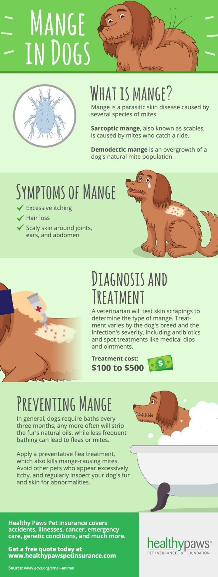 Learn How To Treat Mange in Dogs Dog mange, Vet medicine