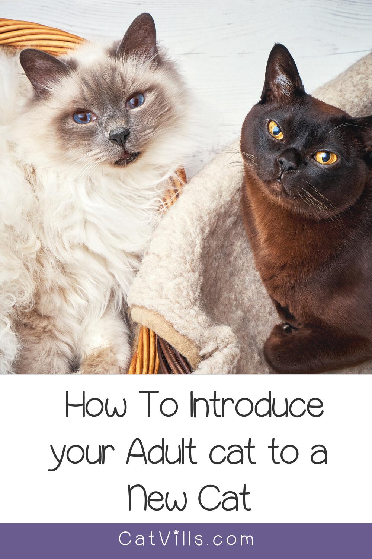 Pin On Cat Kitten Training