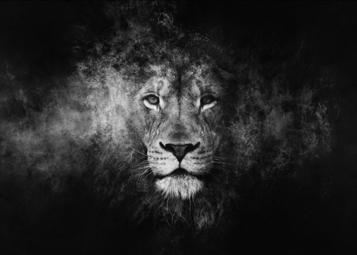 White Lion Poster By Bilawal Khan Displate Lion Wallpaper Lion Hd Wallpaper Lion Pictures