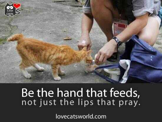 We Feed The Feral Cats In Our Neighborhood The We Is Two Of My