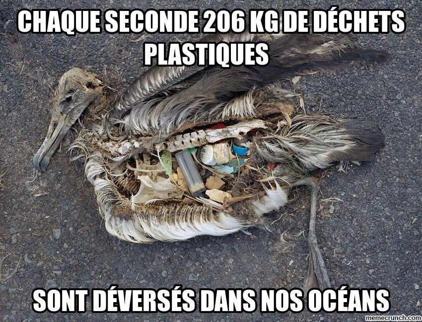 Les océans en danger