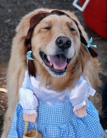 Halloween Pictures Dog Wizard Of Oz