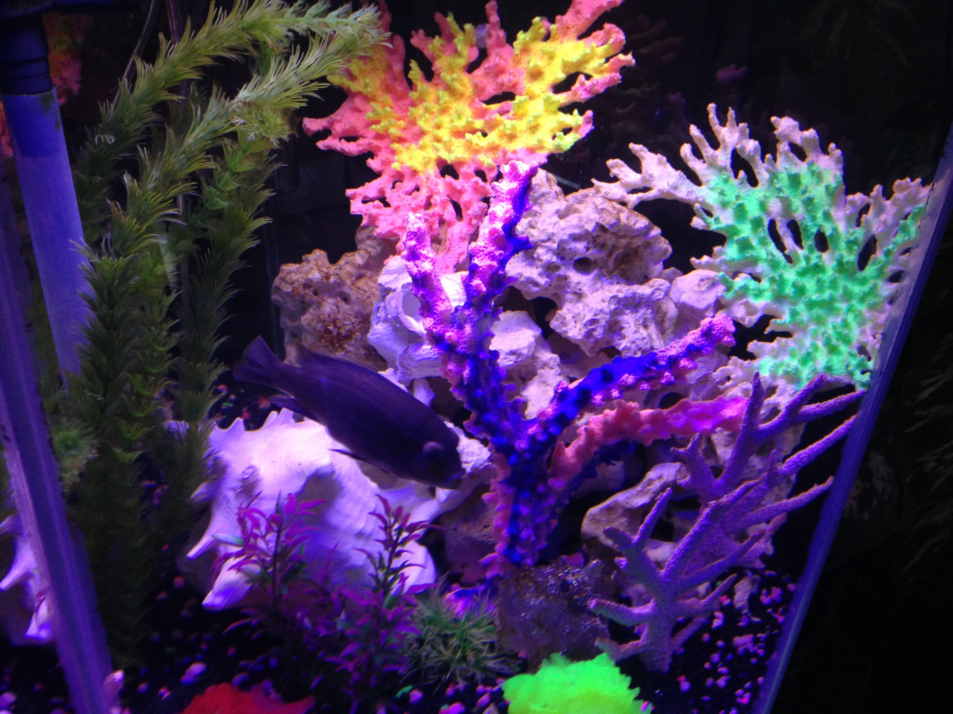 fish let looks once aquarium in got plant will days your louis and put decor tank tidy for the vivid fresh buy orange better it then about artifical coral dry water decoration ornaments out be take