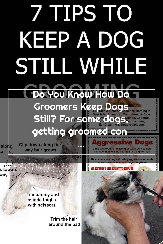 Pin On Pet Grooming