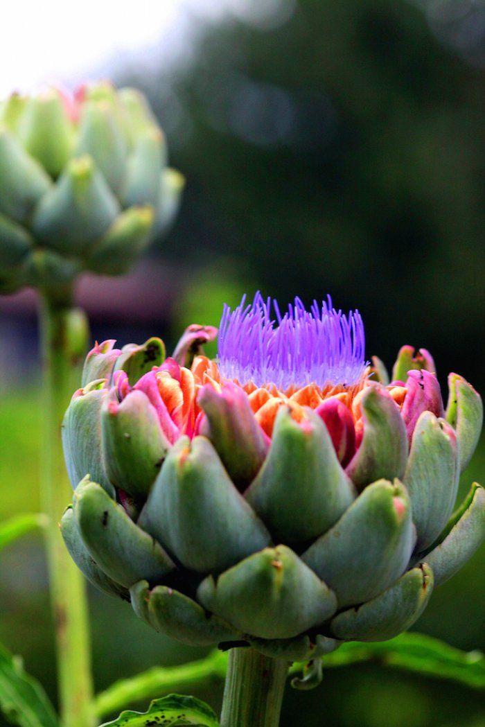 Edible Ornamental Plants For Your Garden Art Pinterest
