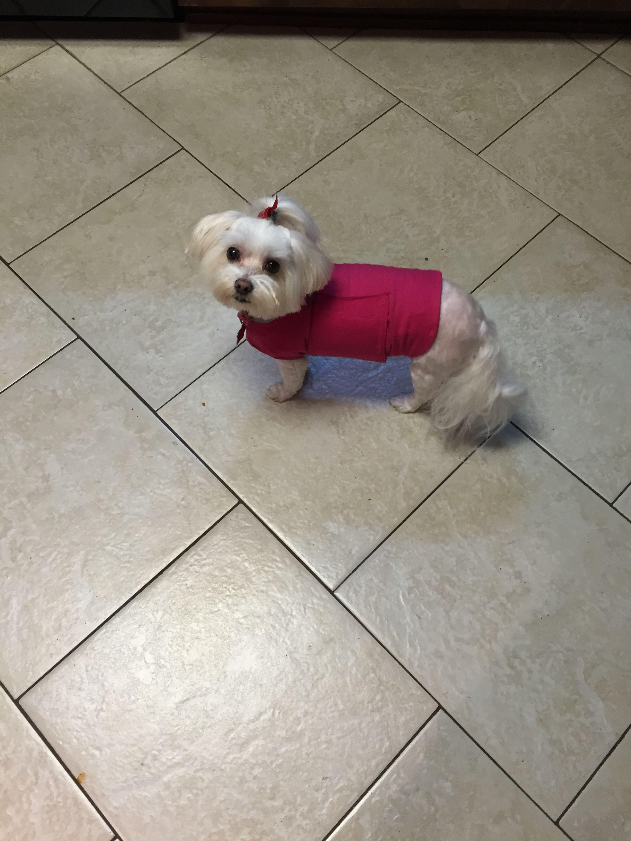 My Thundershirt I Totally Love It