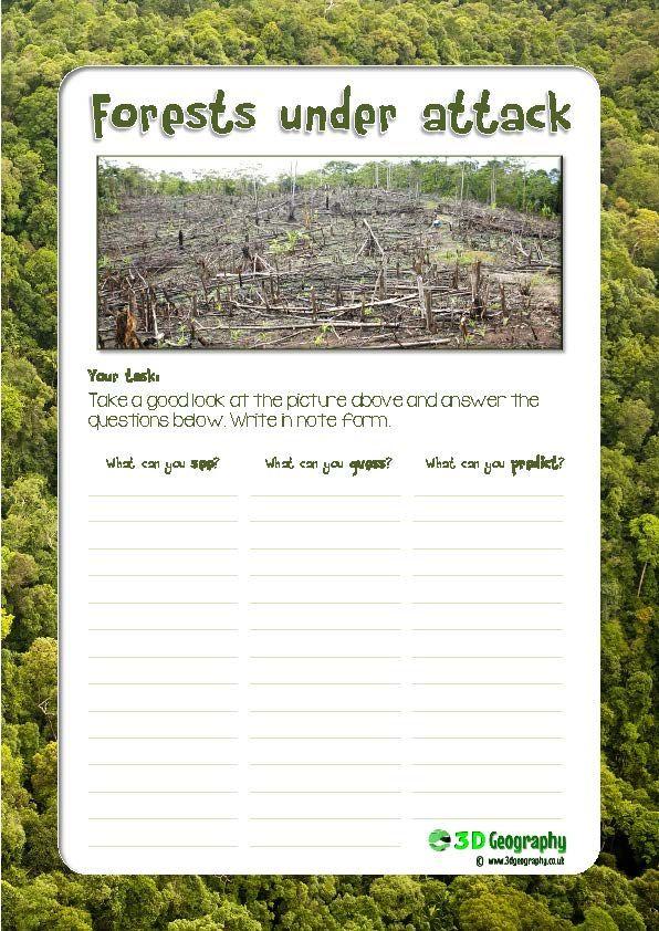 Deforestation in the Amazon | Rainforest | Pinterest ...