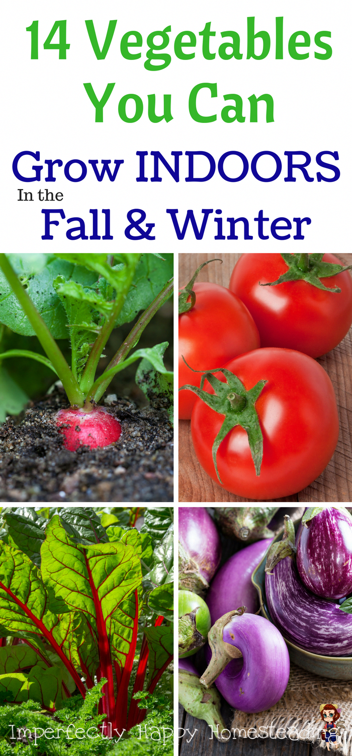 14 Vegetables You Can Grow INDOORS in the Fall  Winter Gardening the house