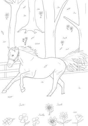 Ausmalbild Pferd Adult Coloring Pages Horses Ausmalen Pferd