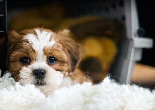 Getting a new dog? Stock up on these essential items and you'll be on your way to becoming an all-star pup parent.