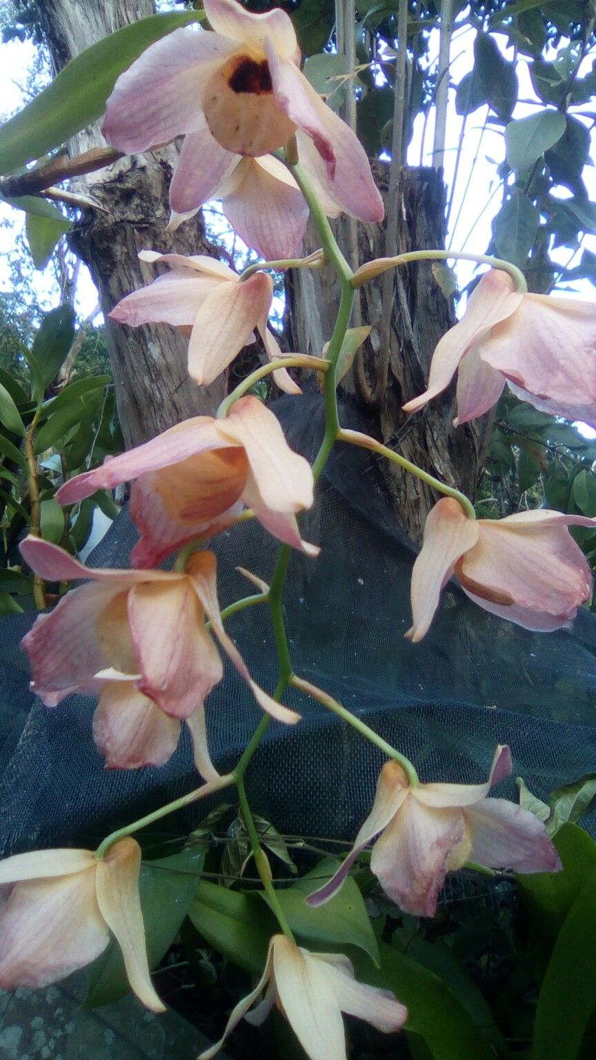 Pin by tania borges on orquideas flor preferida pinterest