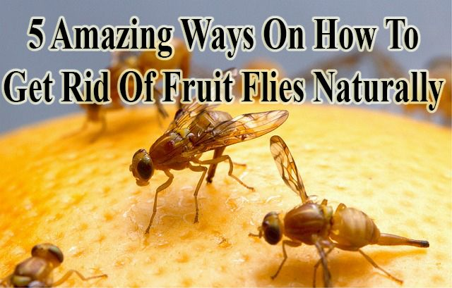 how to get rid of hessian fly agricultural