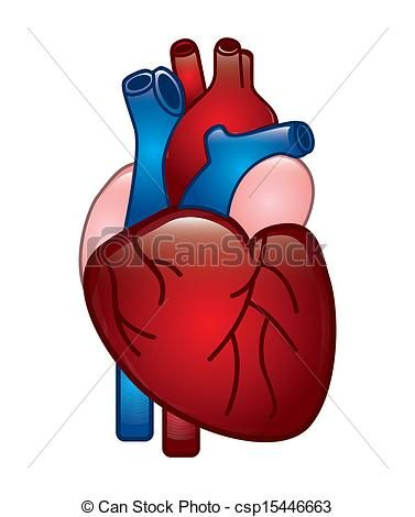 Vector Human Heart Stock Illustration Royalty Free Illustrations Stock Clip Art Icon Stock Clipart Icons Human Heart Heart Illustration Heart Clip Art
