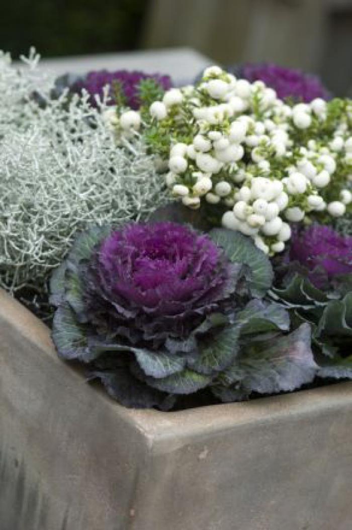 top 10 des plantes pour jardini res d 39 hiver jardin hiver femmes d 39 aujourd 39 hui jardinage. Black Bedroom Furniture Sets. Home Design Ideas