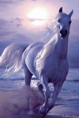 Beautiful Horses Hd Wallpapers Backgrounds 320 480 Horses