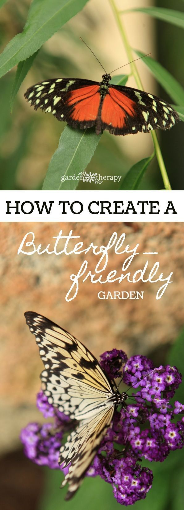 Pretty Pollinators with an Irresistible Butterfly Garden Everything you need to know to create a butterfly gardenEverything you need to know to create a butterfly garden
