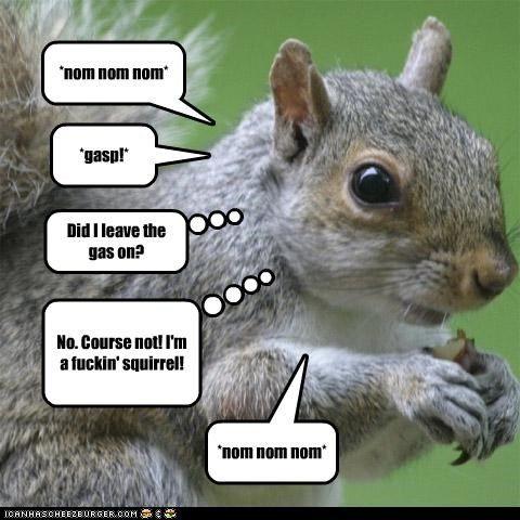 Untitled Eddie izzard, Haha funny, Squirrel