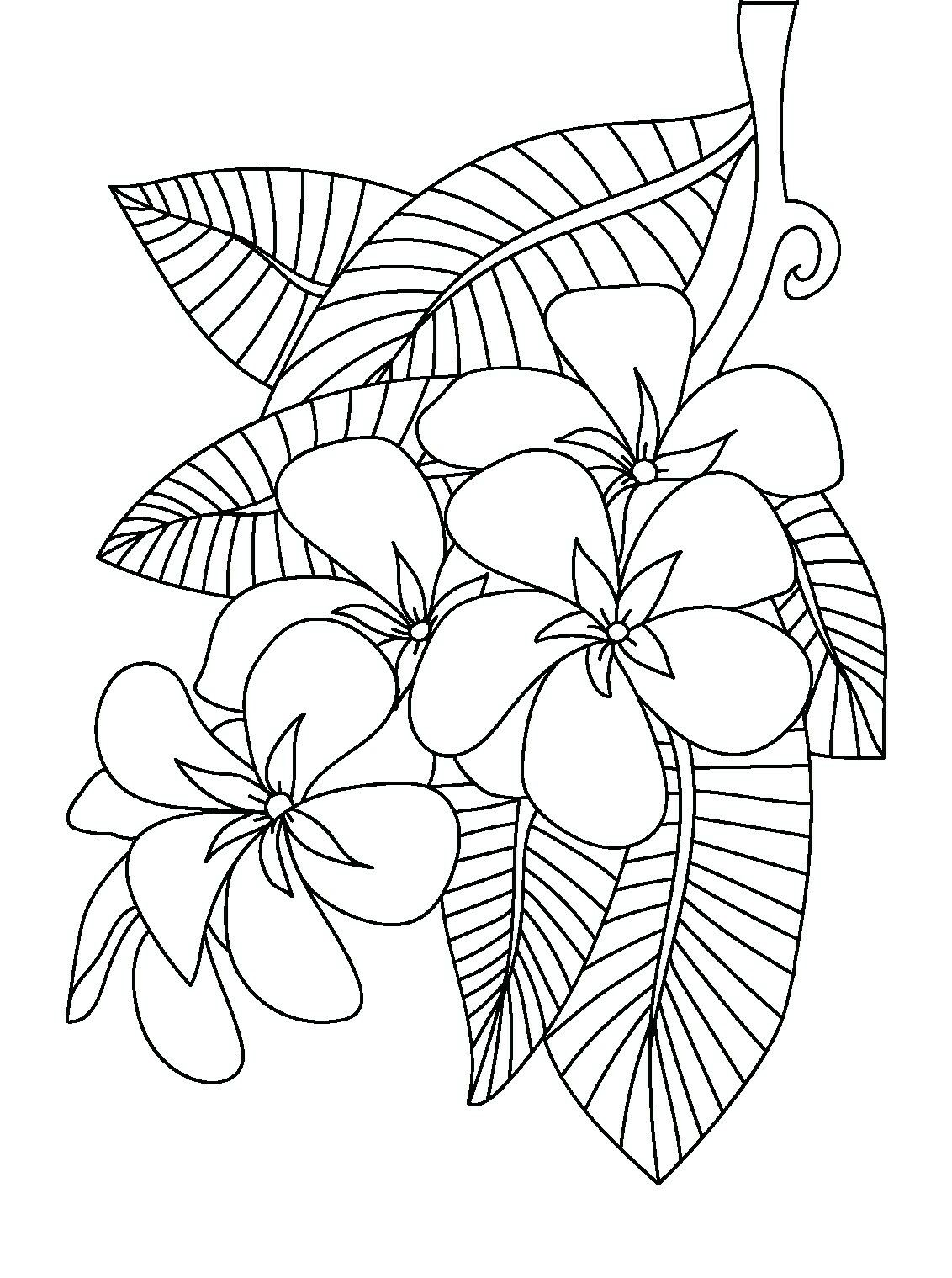 Frangipani Coloring Page Coloring Pages Inspirational