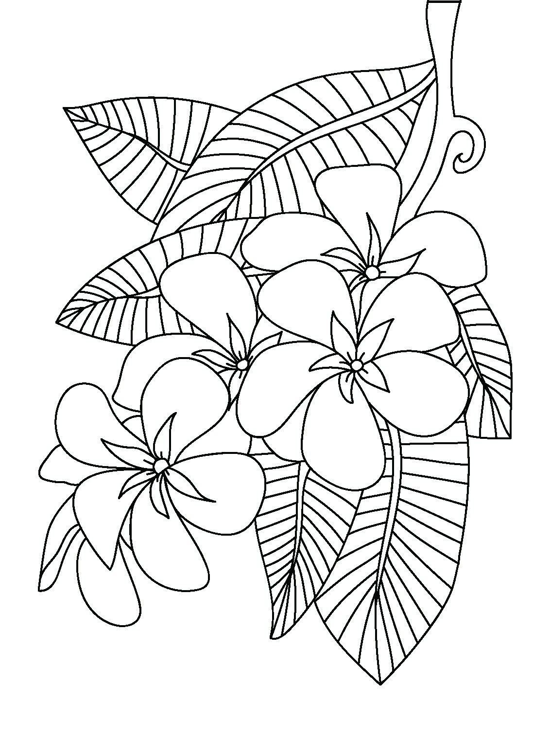Frangipani coloring page Floral