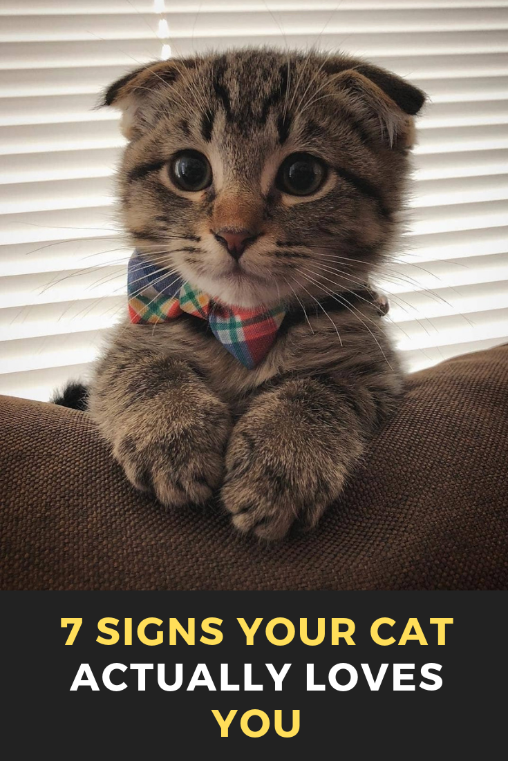 7 Signs Your Cat Actually Loves You Cats Cat Catsofinstagram Of Catstagram Beautifulcats Pets Catlover Pet Instacat Baby Cats Cats And Kittens Cats