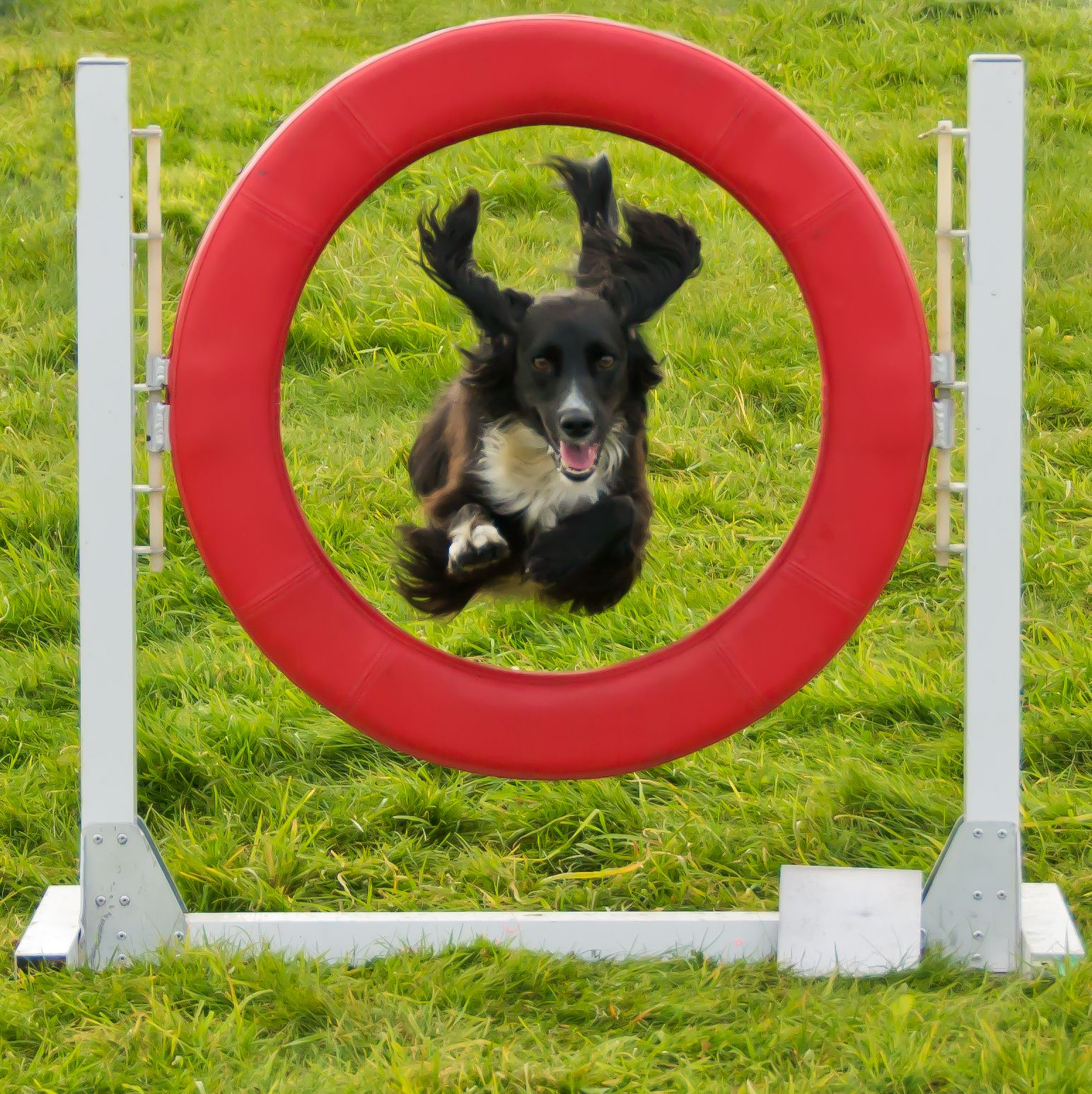 Wings!!! Dog agility, Dog photos, Dog biting training