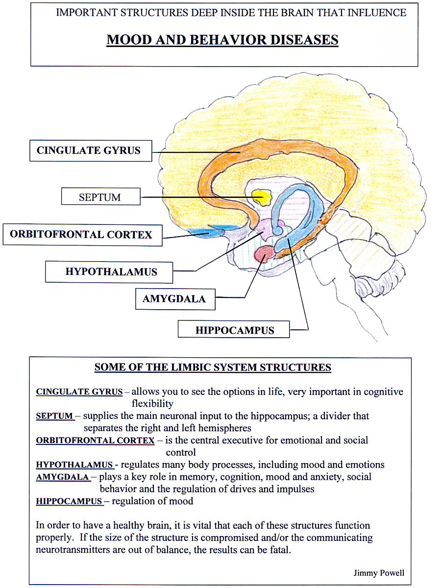 What Is the Limbic System | Limbic System - Mood and Behaviour | ACC ...