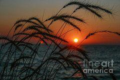 Lloyd Goldstein - Sunset Through The Reeds