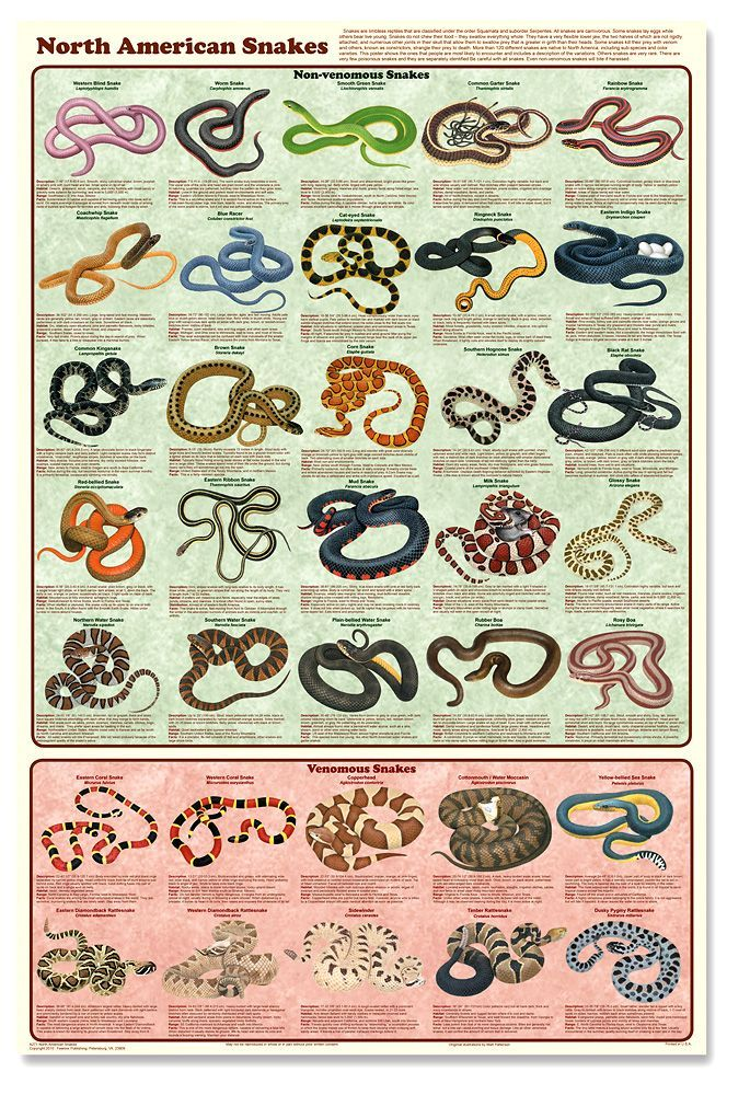 Snake Bite First Aid Poster   North American Snakes Poster ...
