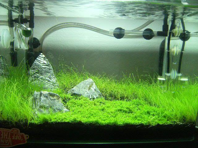 Amazing 10 Gallon: HC/Dwarf Hairgrass