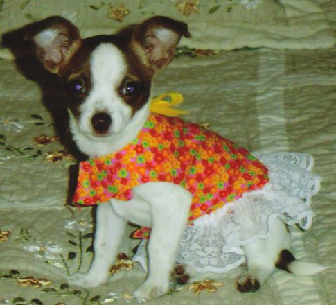 My Pet Clothing Sewing Pattern made for COC - Circle Of Crafters ...